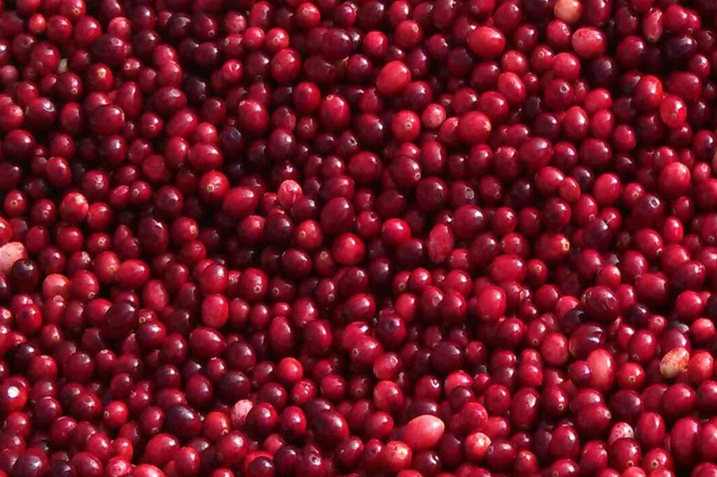 Sno Pac Organic Whole Cranberries